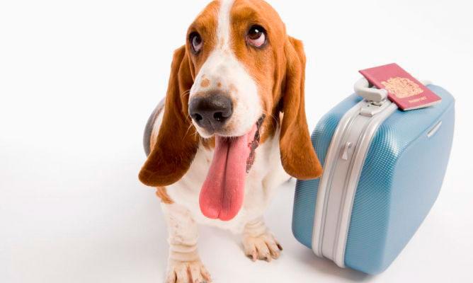 viajar-mascotas-1